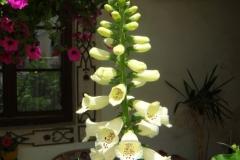 Überall Blumen