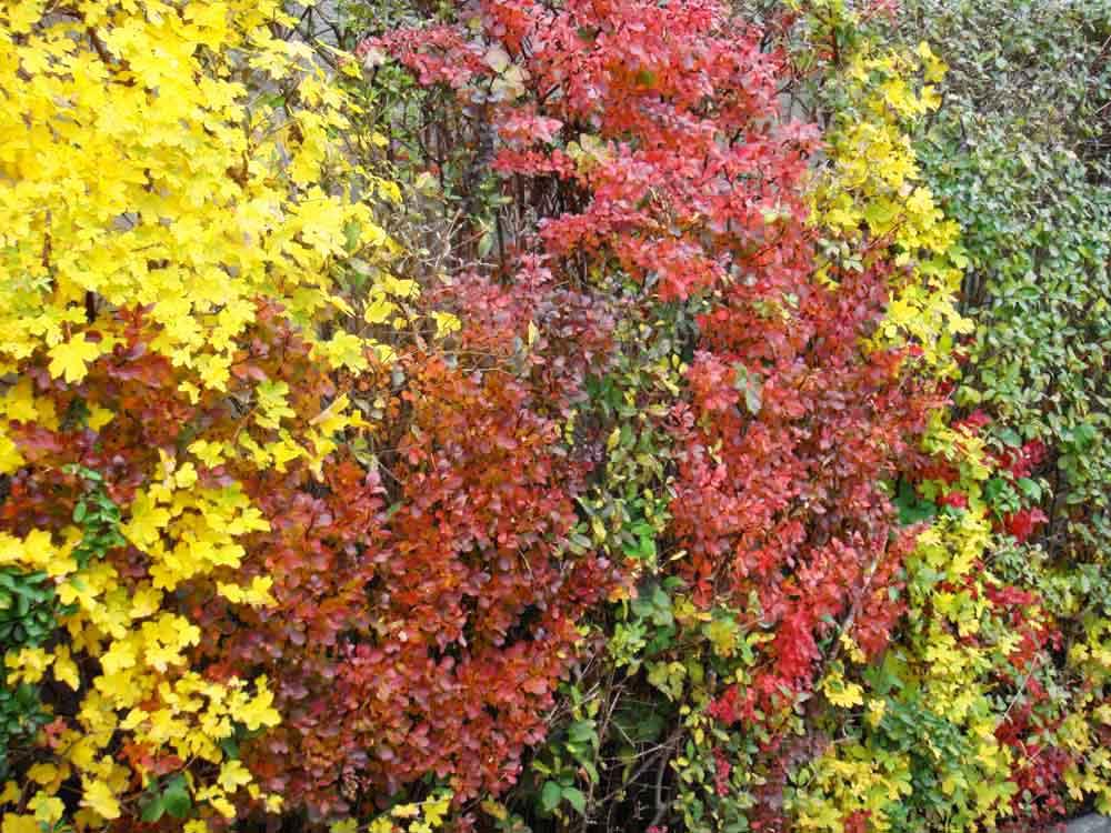 Herbstfarben4