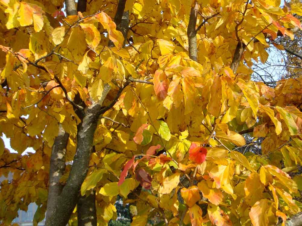 Herbstfarben5