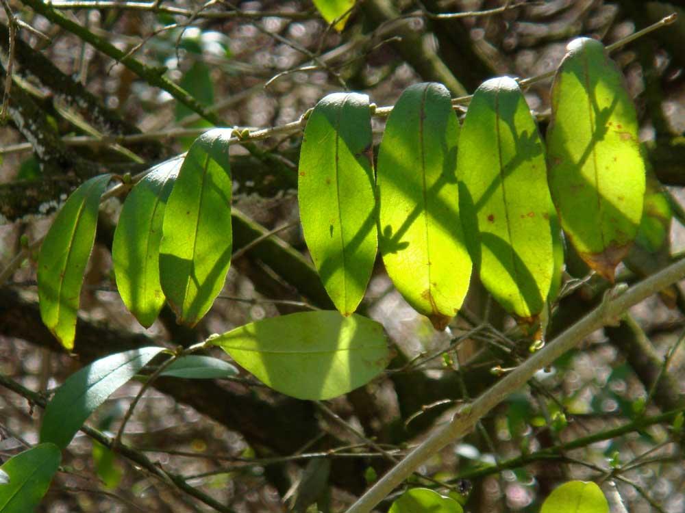 Gegenlicht grün
