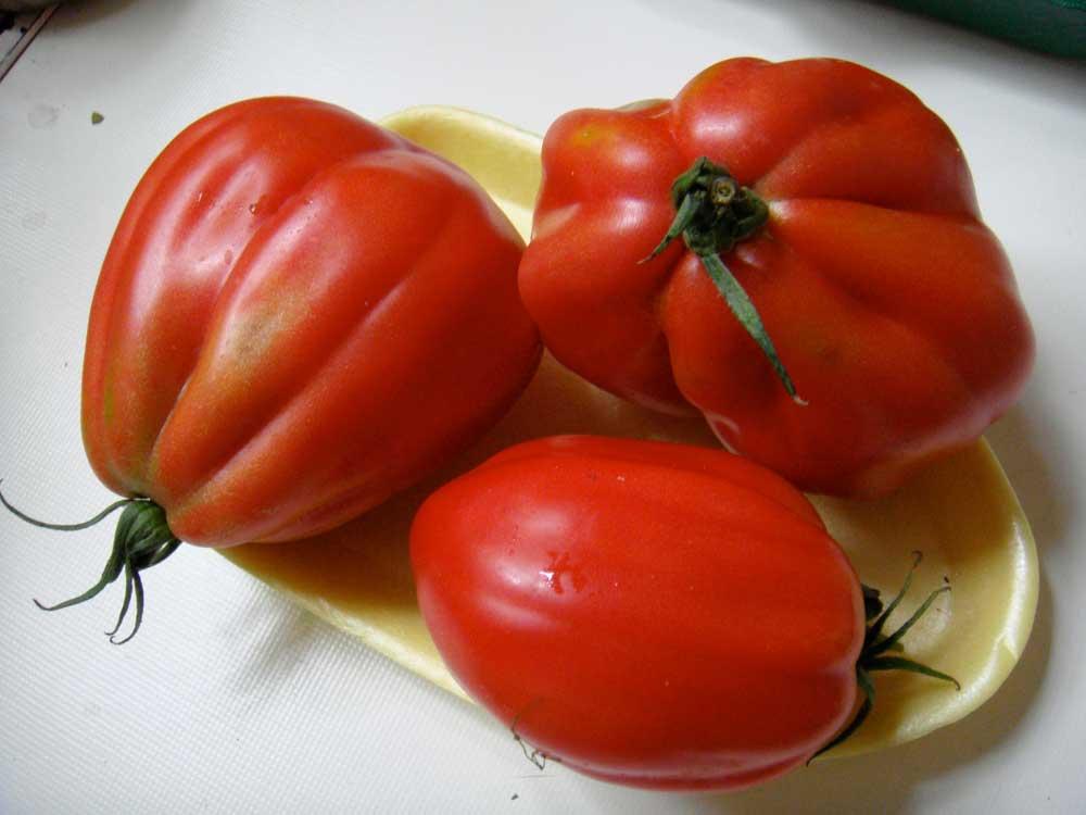 Paradeiser Tomaten