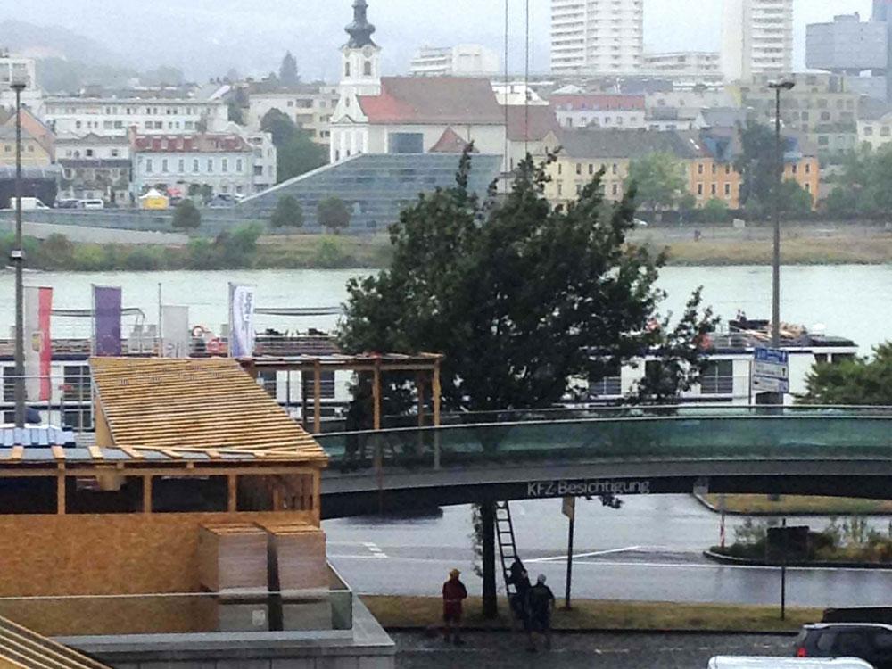 Baumsterben in Linz
