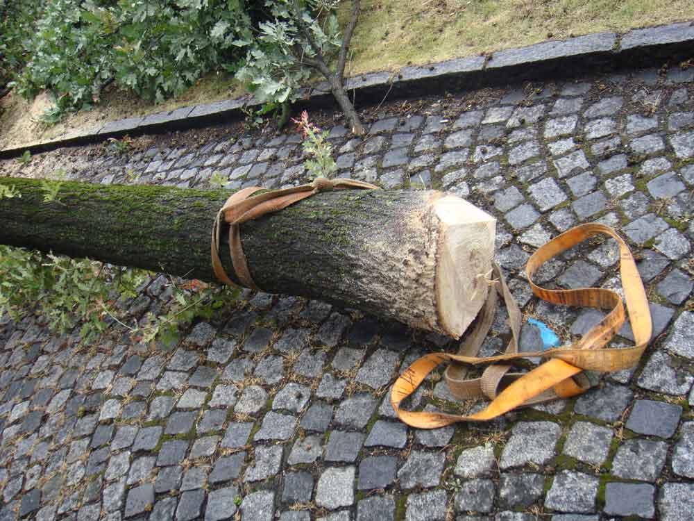 Baumsterben gefällt gebunden