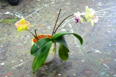 Topfblumen - Blumentopf