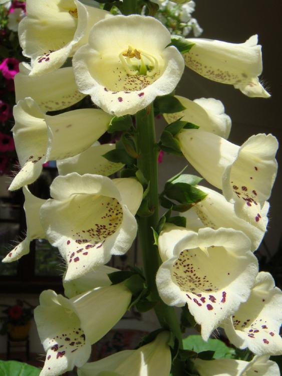 Blumendetail für Stefanie
