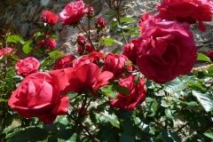 Rosen auf der Rosenburg, was sonst? (Foto: Roswitha)
