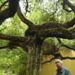Baum! (Foto: Roswitha)