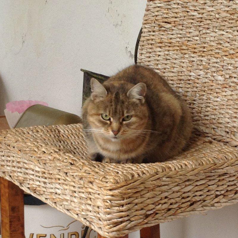Romanas Katze