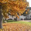 Herbstfarben (Foto: Roswitha Panholzer)